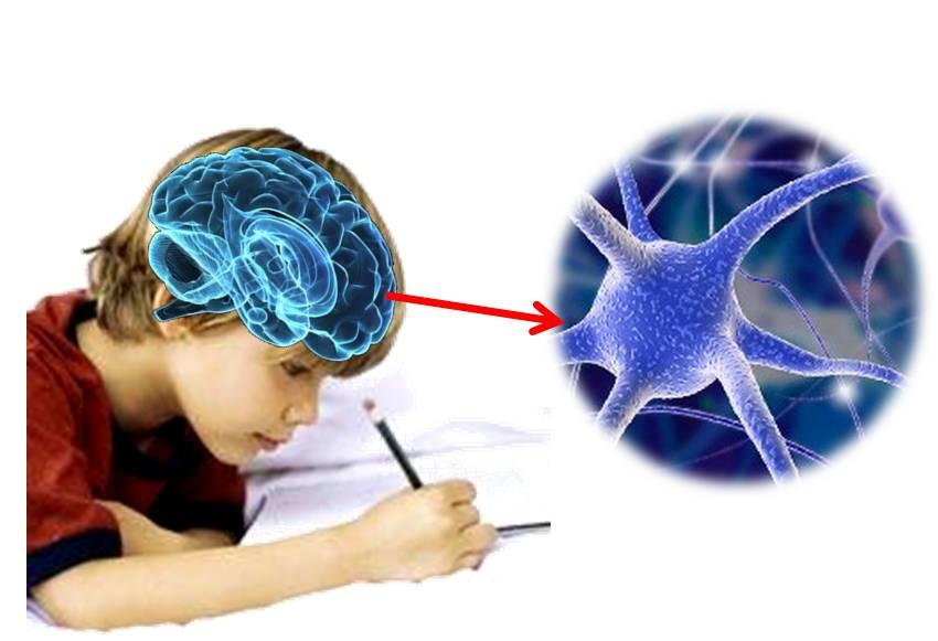 escritura cerebro