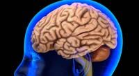 La neurociencia ha descubierto recientemente algunos datos sobre el cerebro que,cada vez más, nos sorprenden por su potencia: Cada neurona […]