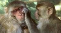 Un equipo dirigido en la Universidad de Newcastle ha arrojado luz sobre las raíces evolutivas del lenguaje en el cerebro. […]