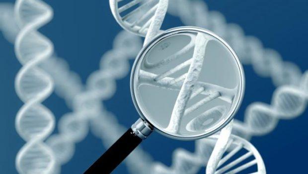 Un estudio realizado en Escocia ha estimado por primera vez la medida en que los genes influyen en la evolución […]